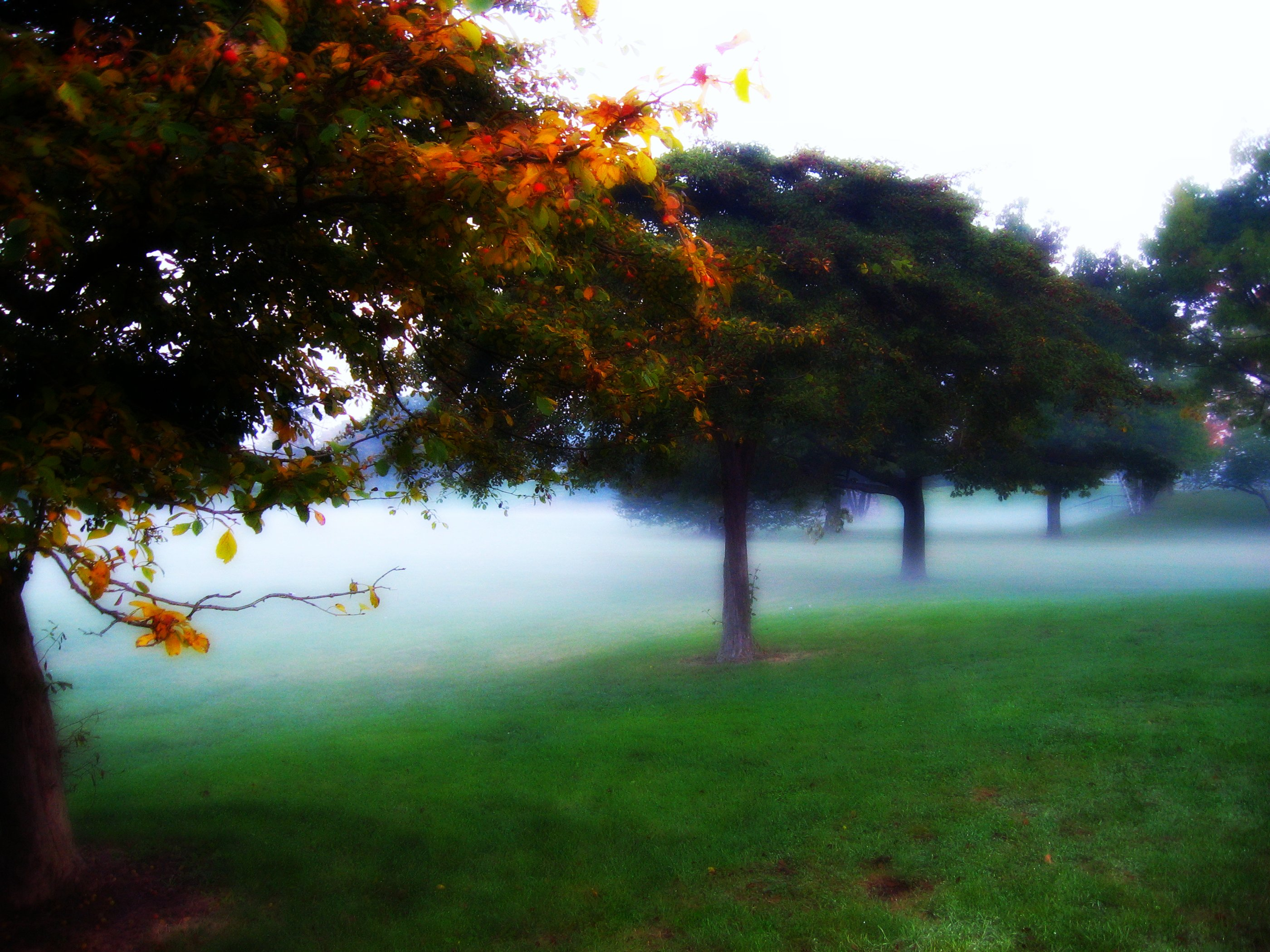 Morning fog in Mitchell Park, Milwaukee, Wisconsin