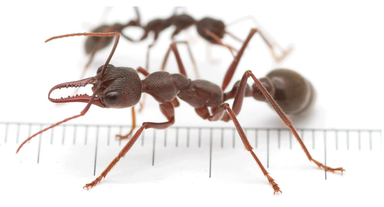 Dog Getting Bitten By Ants