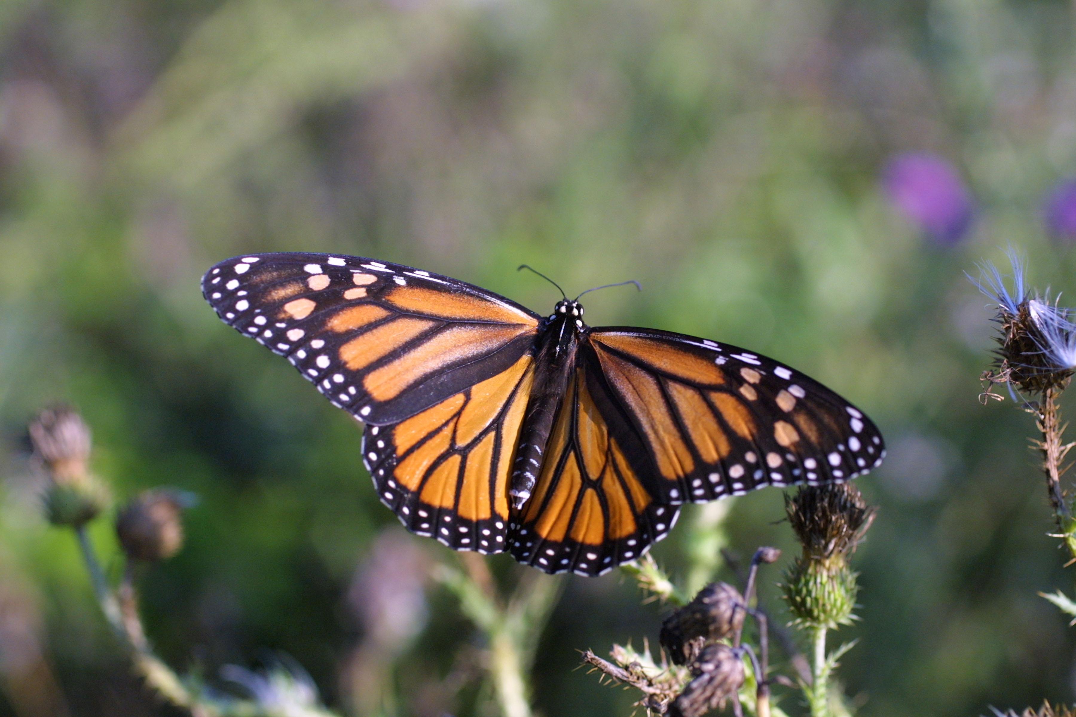 File:National Pollinator Week.jpg - Wikimedia Commons