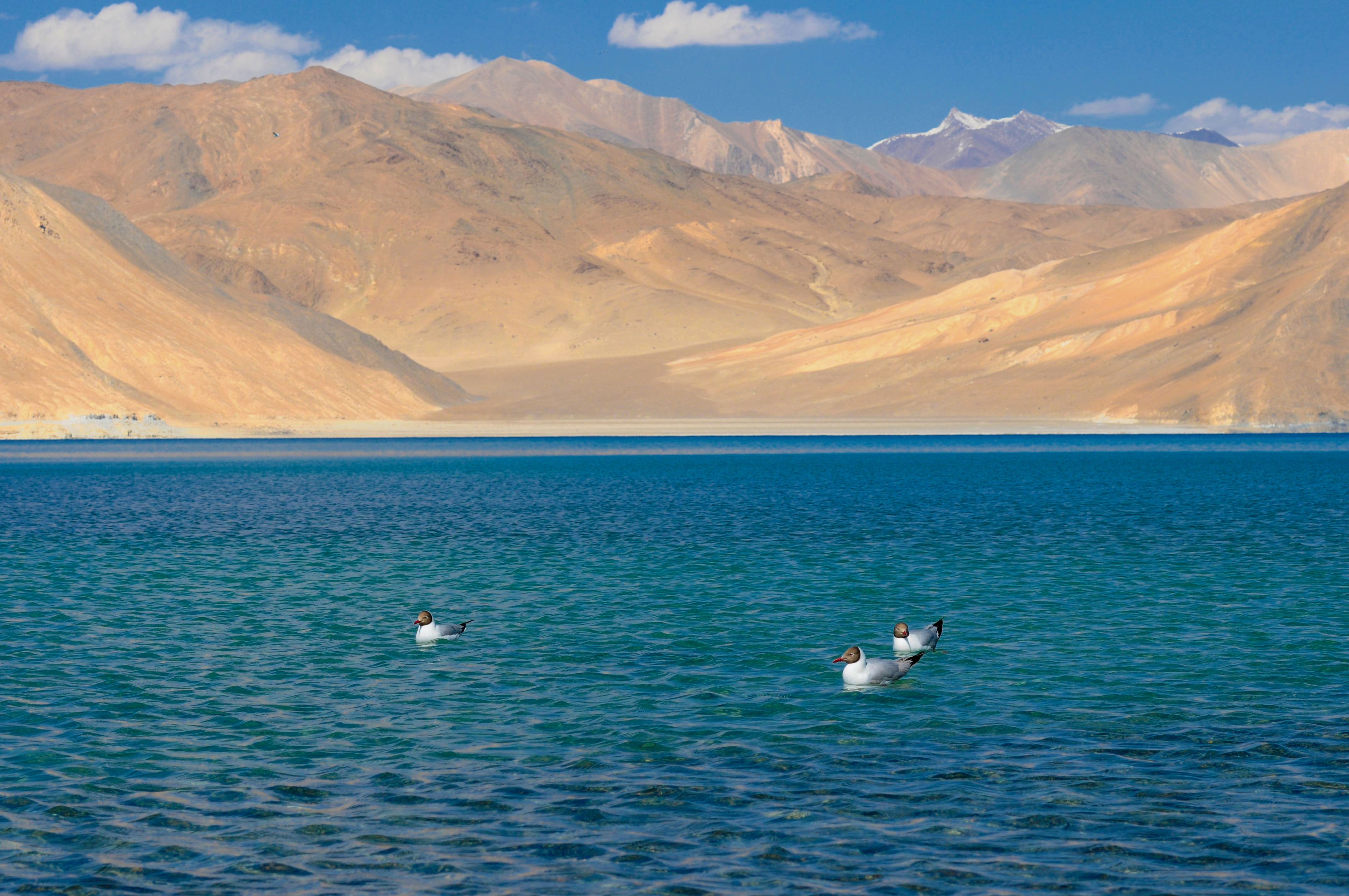 Leh Ladakh Travel Guide 2020 :Lets Get Lost In Landscapes 2