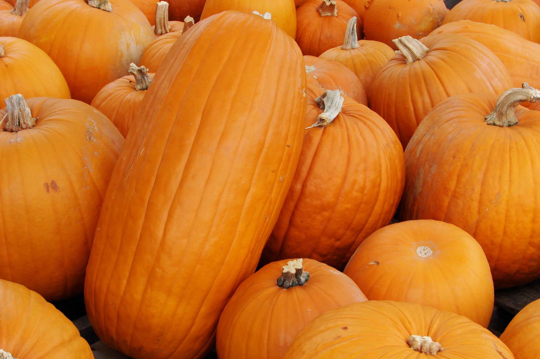 Pumpkin you re dating a tumbling dickweed