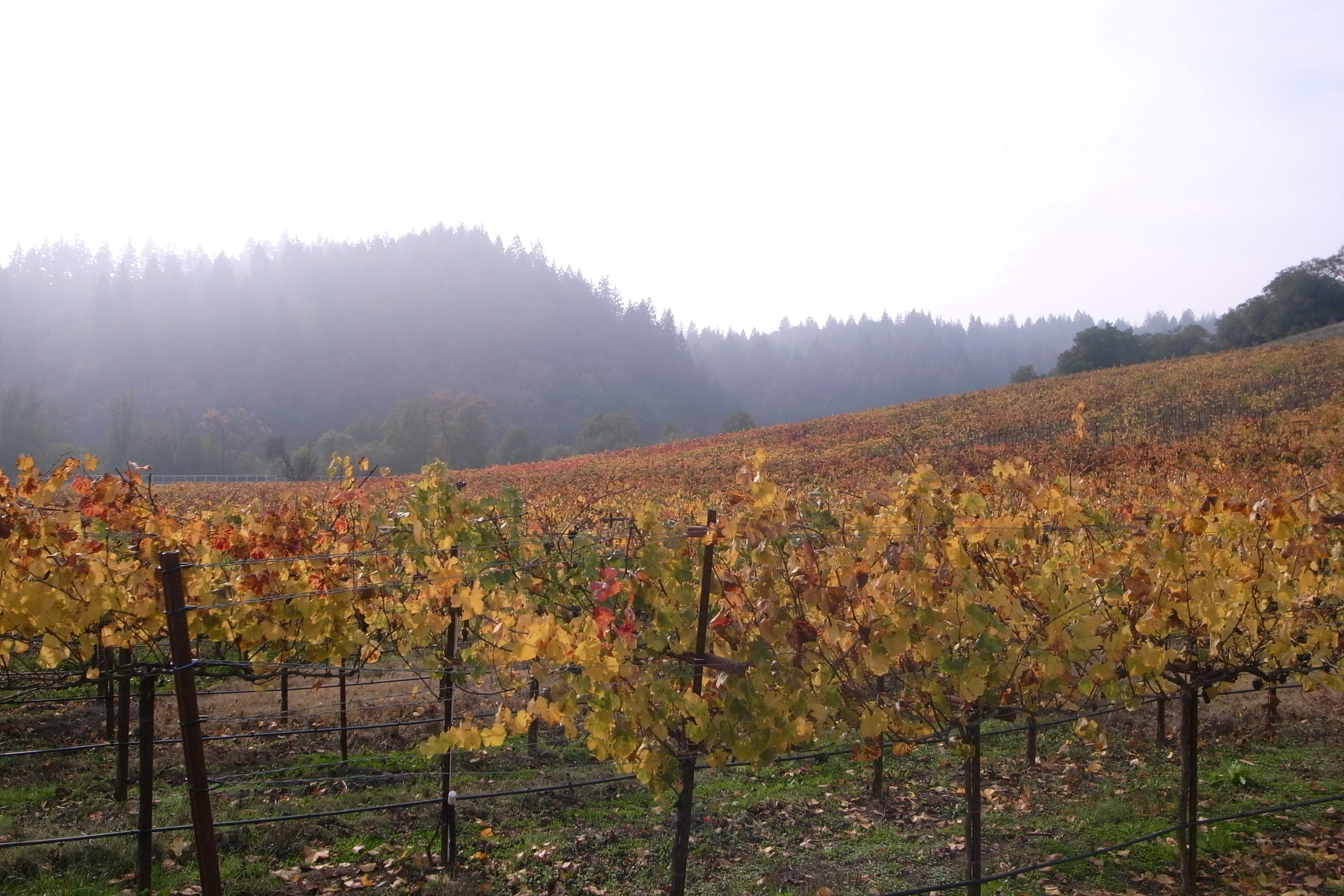 Of Russian River Valley 116