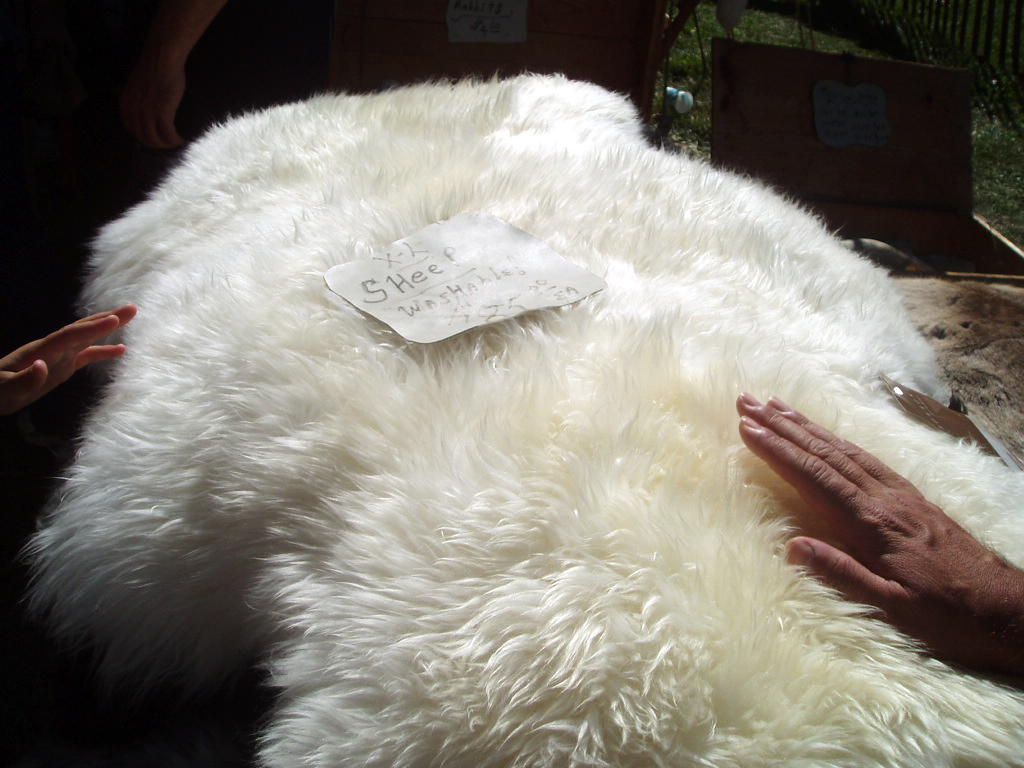 Sheepskin Leather Car Seat Covers By Sam S Club