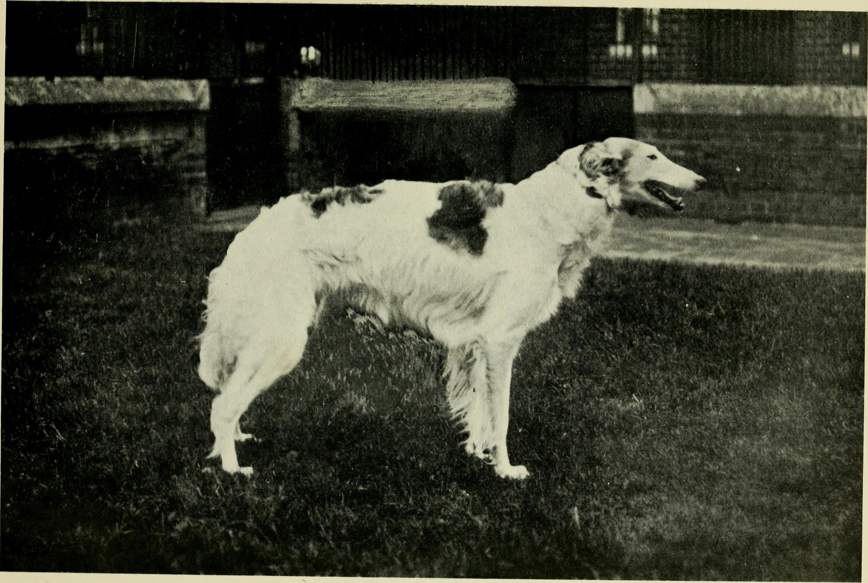 Image Result For Dog Training London
