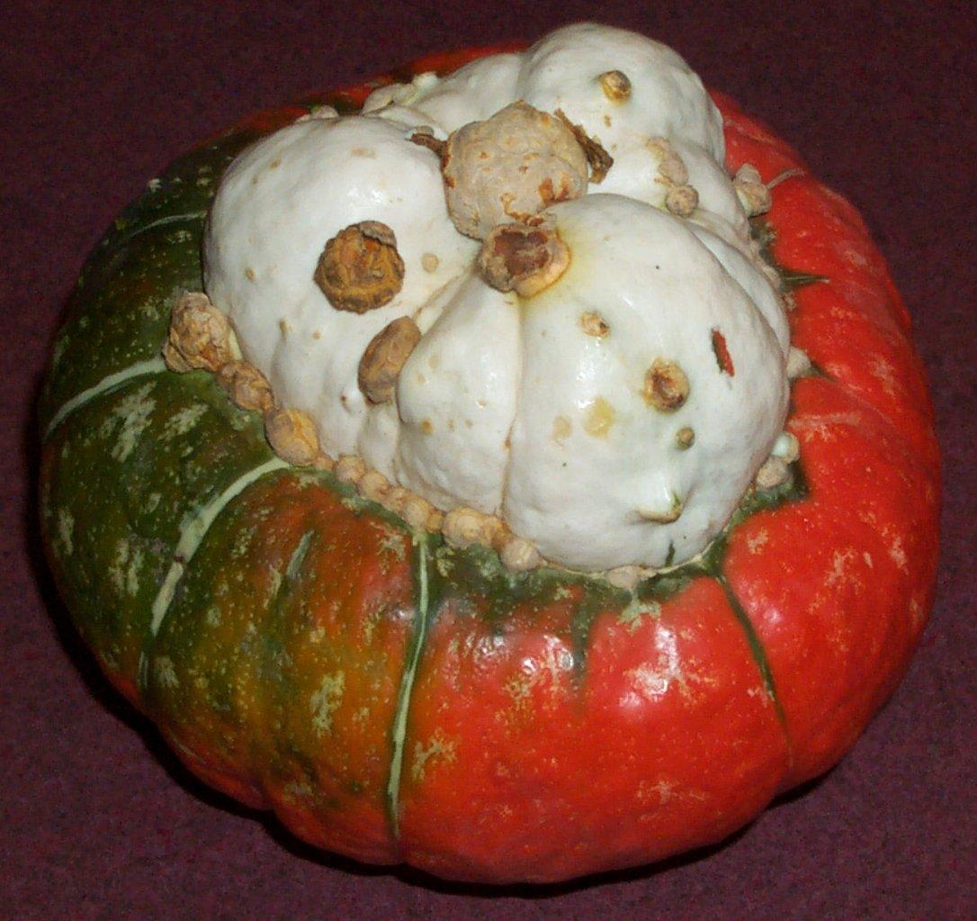 Zucca Di Halloween Quando Seminare.Zucca Turbante Turco Wikipedia