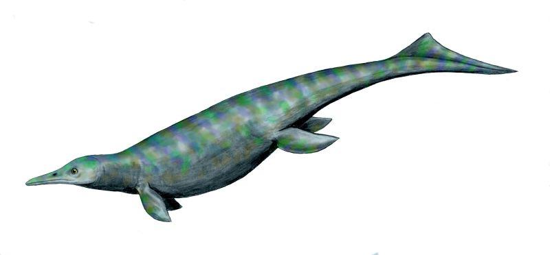 Depiction of Utatsusaurus