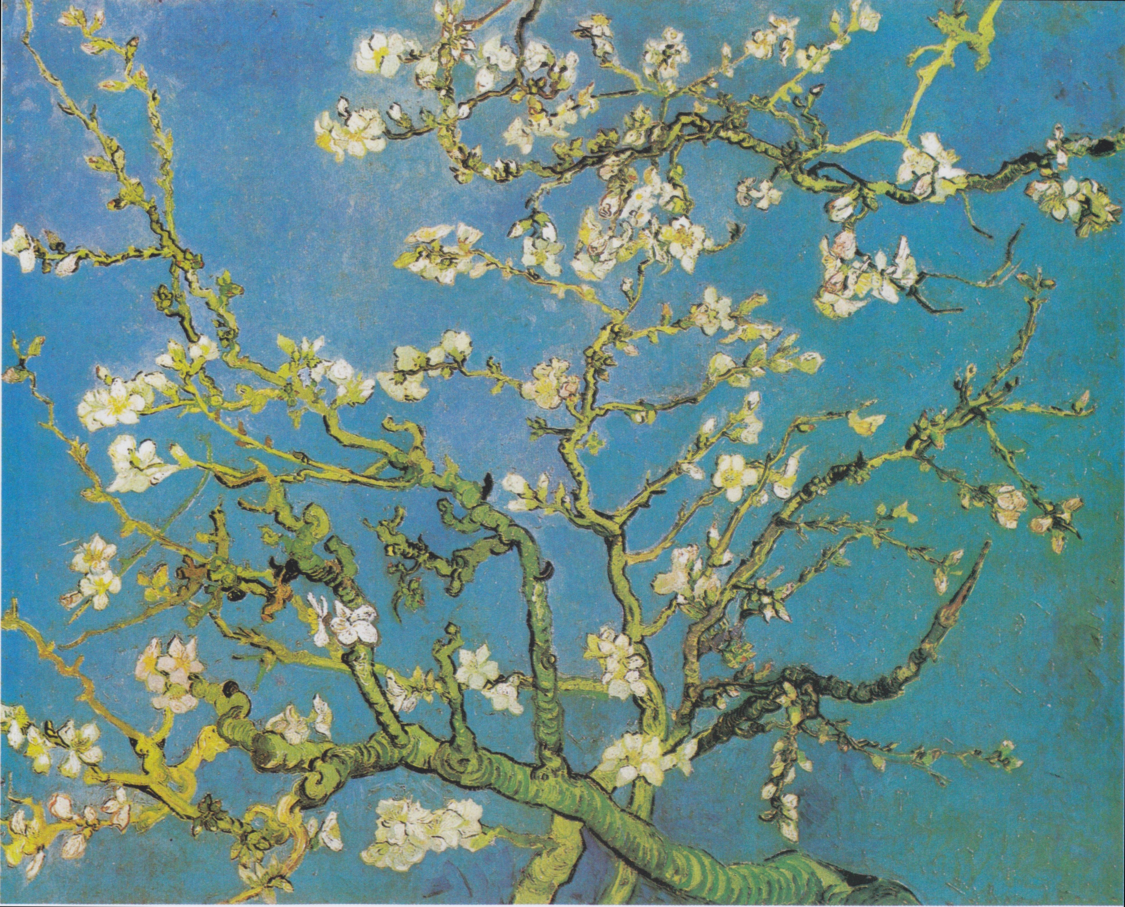 File Van Gogh Bl 252 Hende Mandelbaumzweige Jpeg Wikimedia