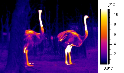 Thermal Imaging Of Living Room Heat Loss Over Garage