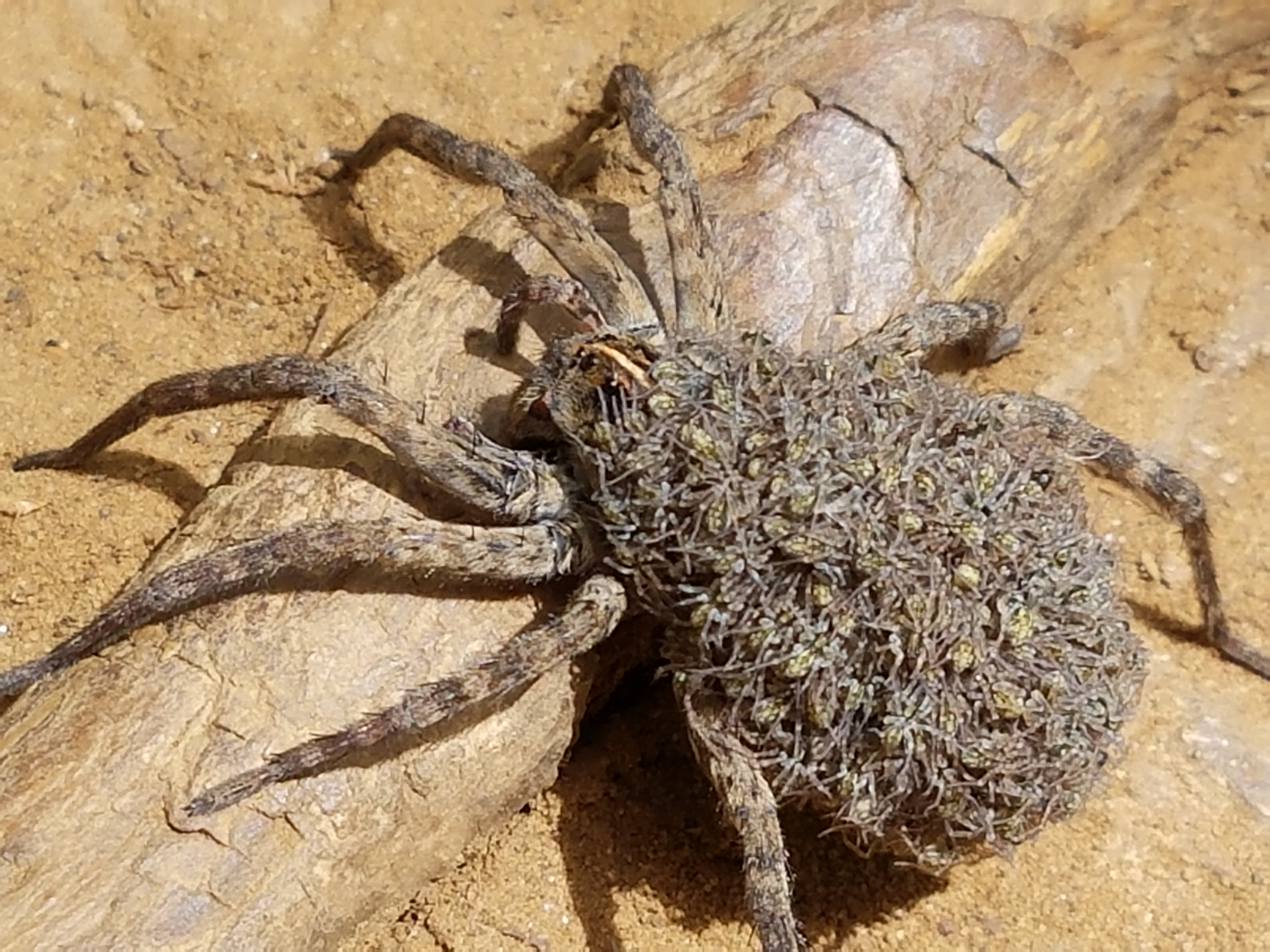 Image Result For Desert Scorpion Coloring