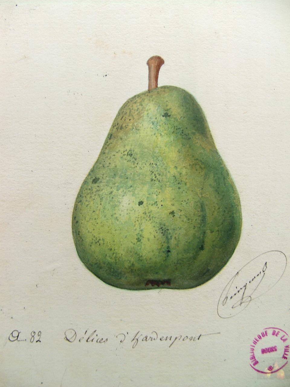 D lices d 39 hardenpont wikip dia for Alexandre jardin bibliographie