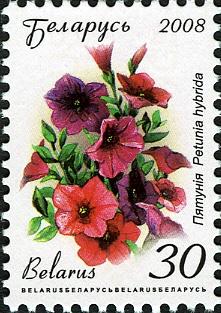 2008. Stamp of Belarus 11-2008-06-10-petuniya.jpg