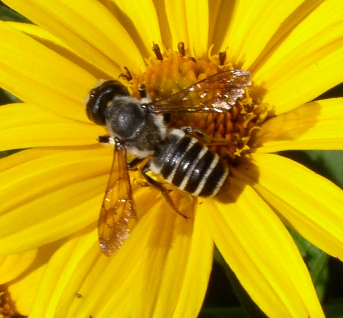 File:4706bee.web.jpg