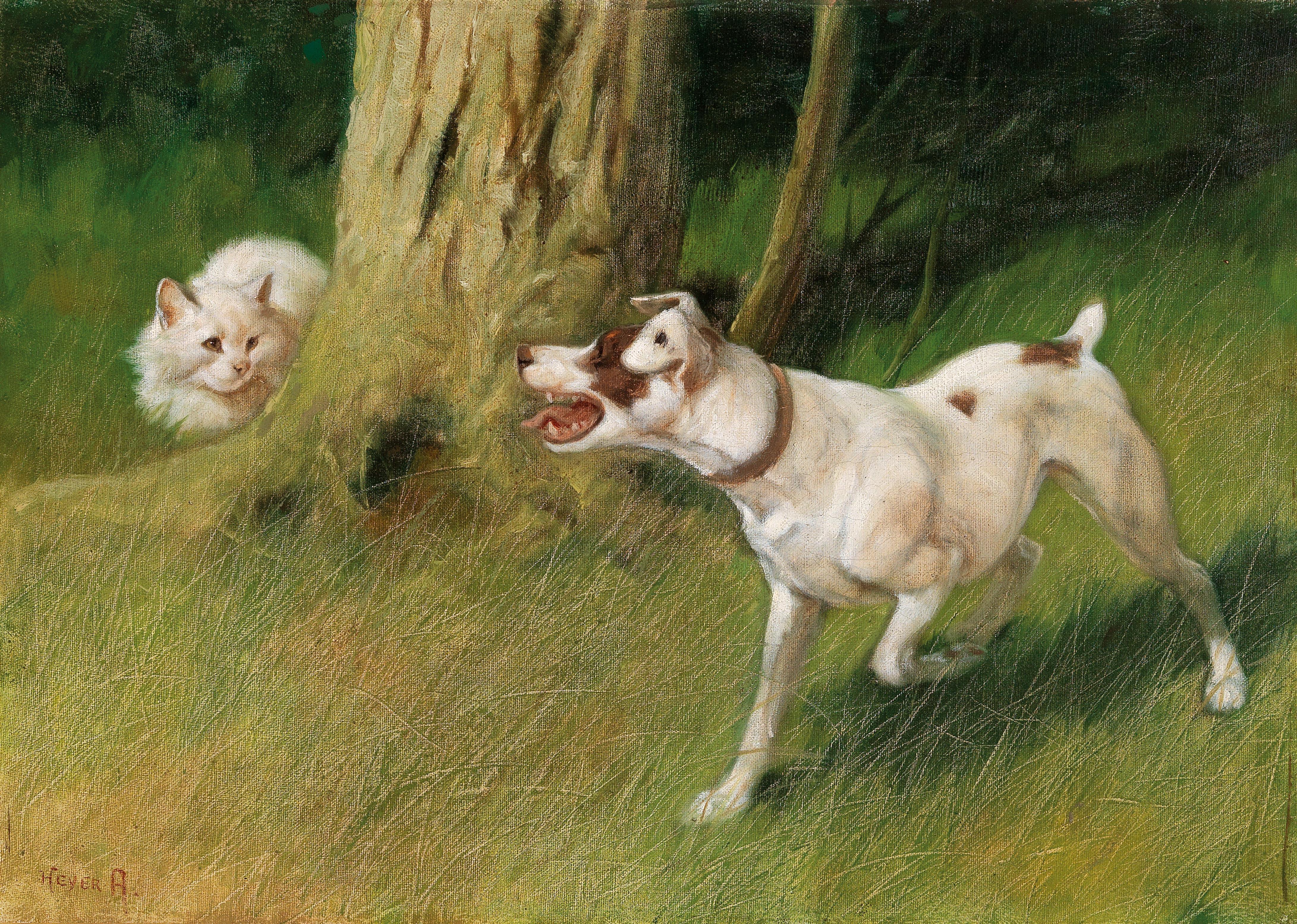 Картинки собака лает на кота