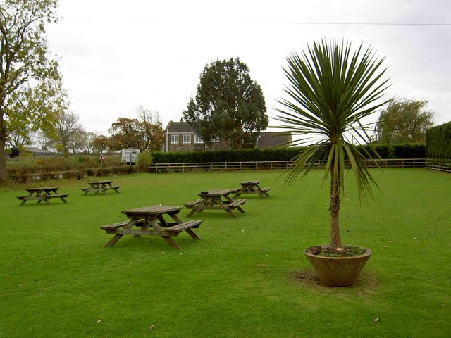 File:Chequers Inn Beer Garden And Palm Tree In U0027tropicalu0027 North Yorkshire