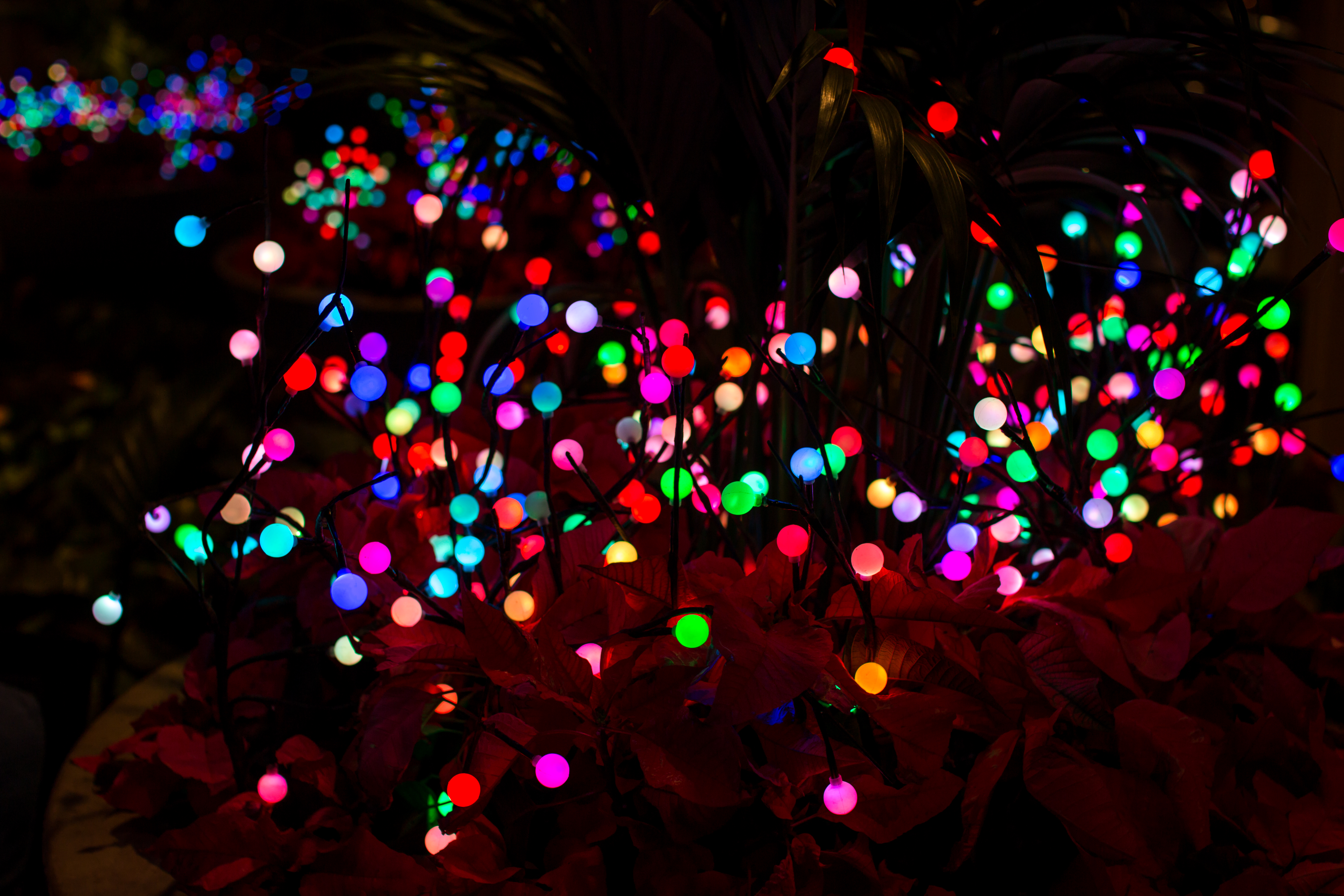 filechristmas at disneyland hotel 28244222726jpg - Disneyland Christmas Dates