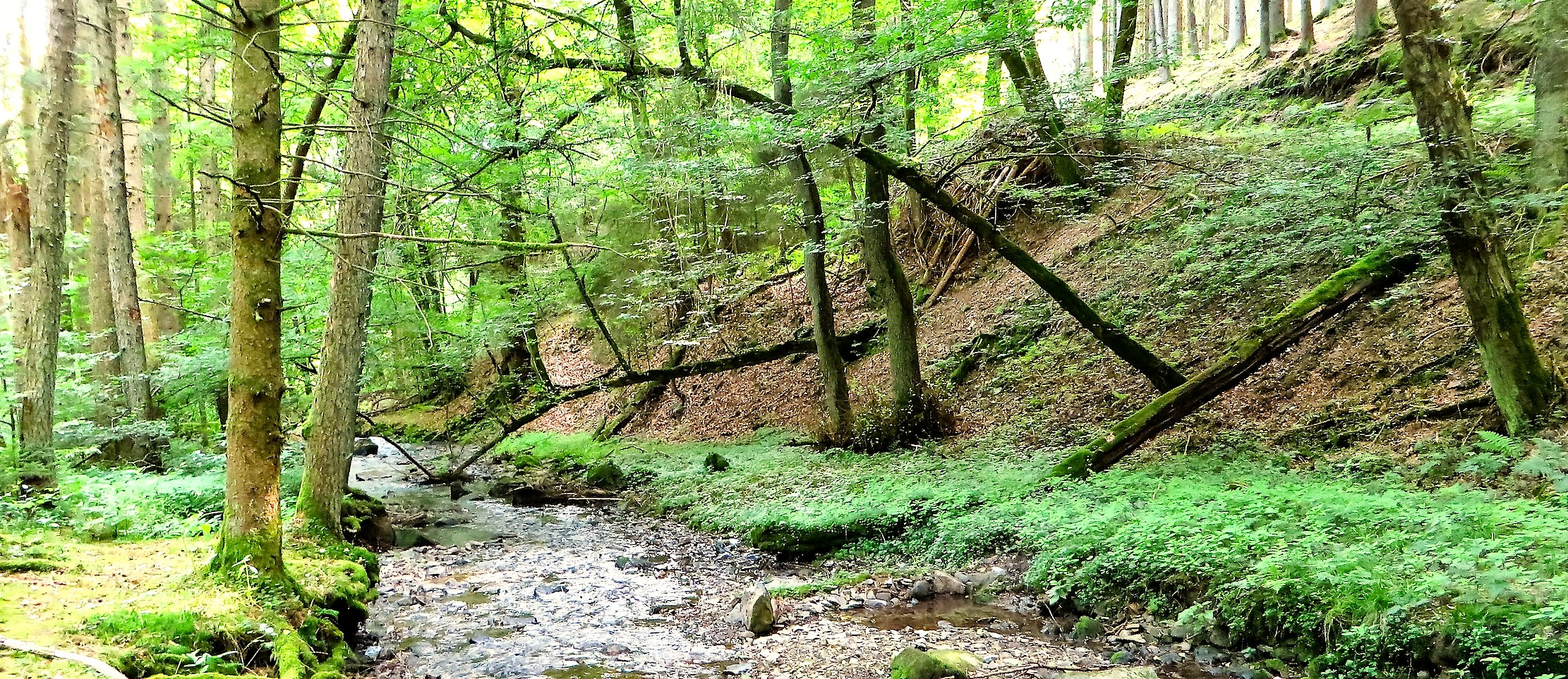 В долине горного ручья Эпшейдер Бах.