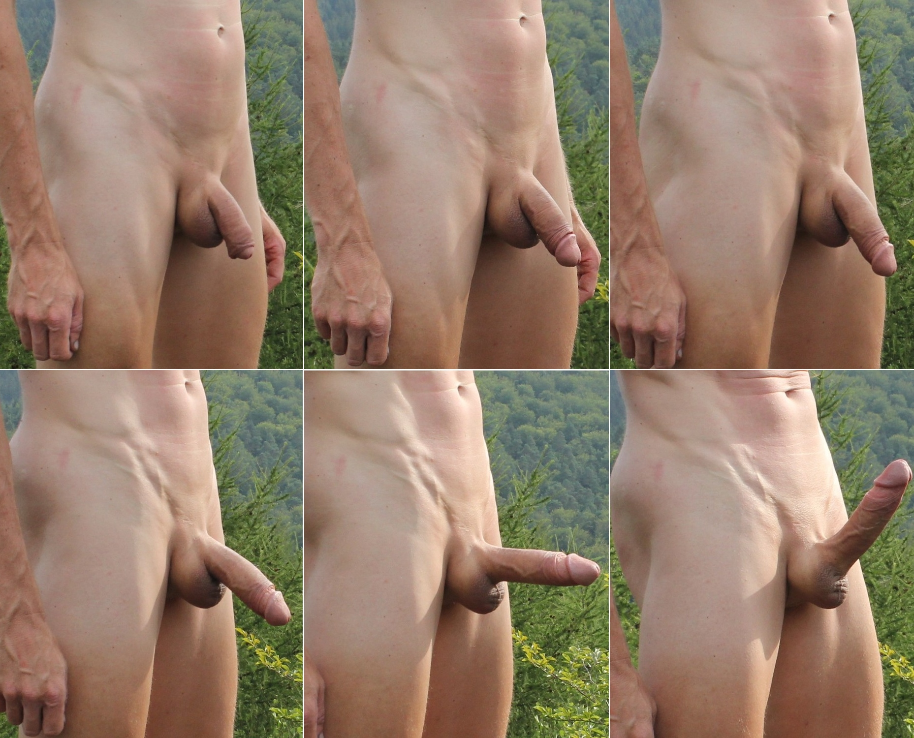 File:Flaccid to Stiffy Penis, Erection development,.jpg