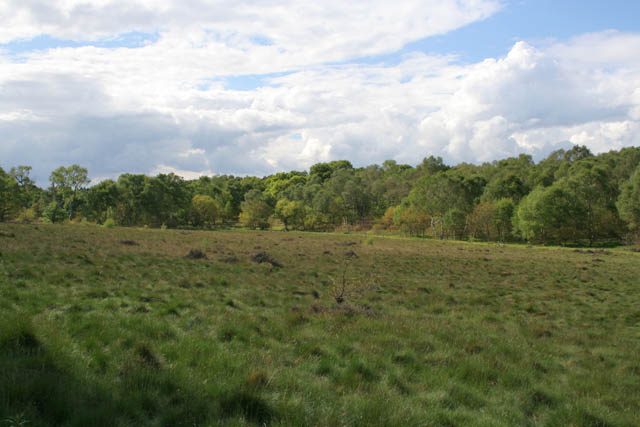 Gleadthorpe Open, Sherwood Forest Country Park - geograph.org.uk - 1330942