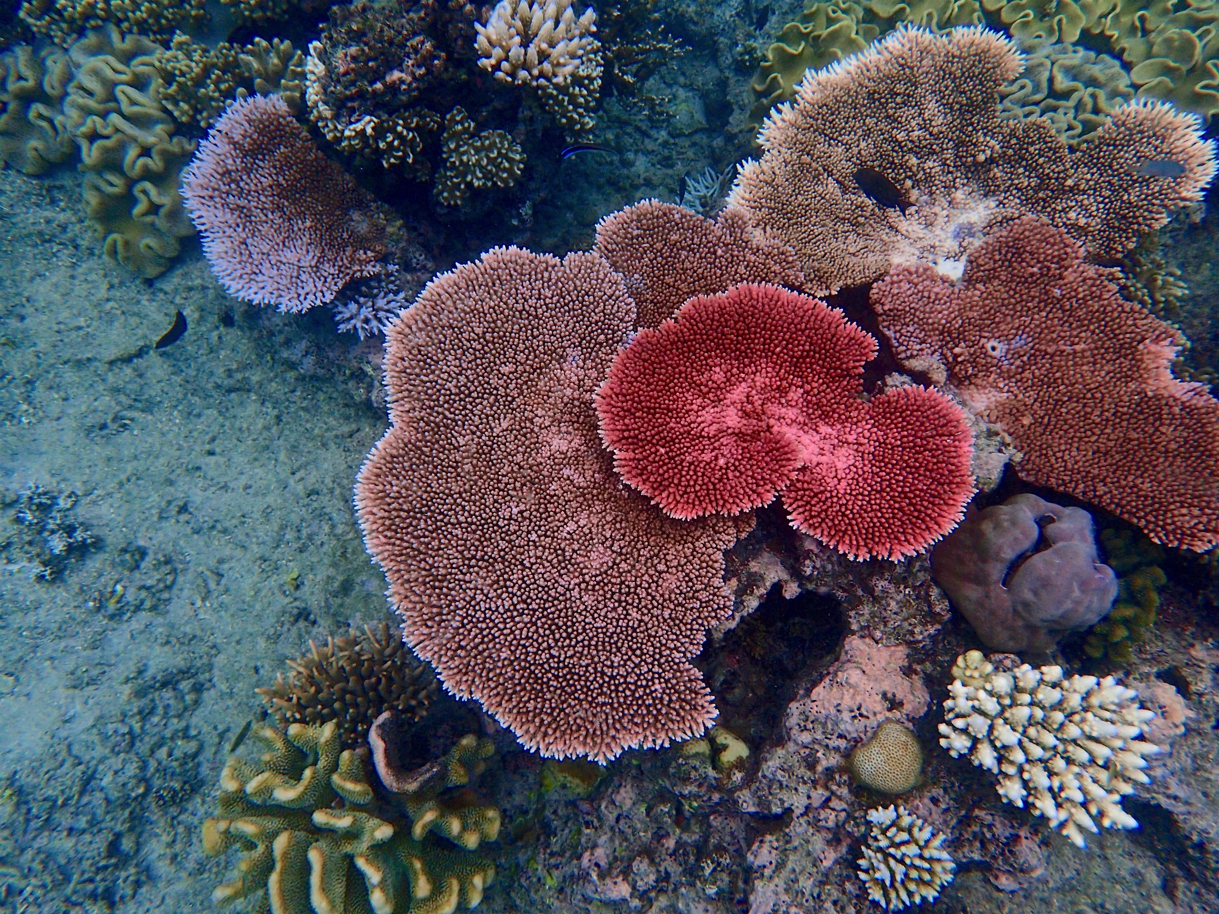 an overview of the great barrier reef The great barrier reef is a site of remarkable variety and beauty on the north-east coast of australia it contains the world's largest collection of coral reefs, with 400 types of coral, 1,500 species of fish and 4,000 types of mollusc.