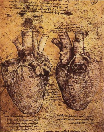 Heart And Blood Vessels By Da Vinci