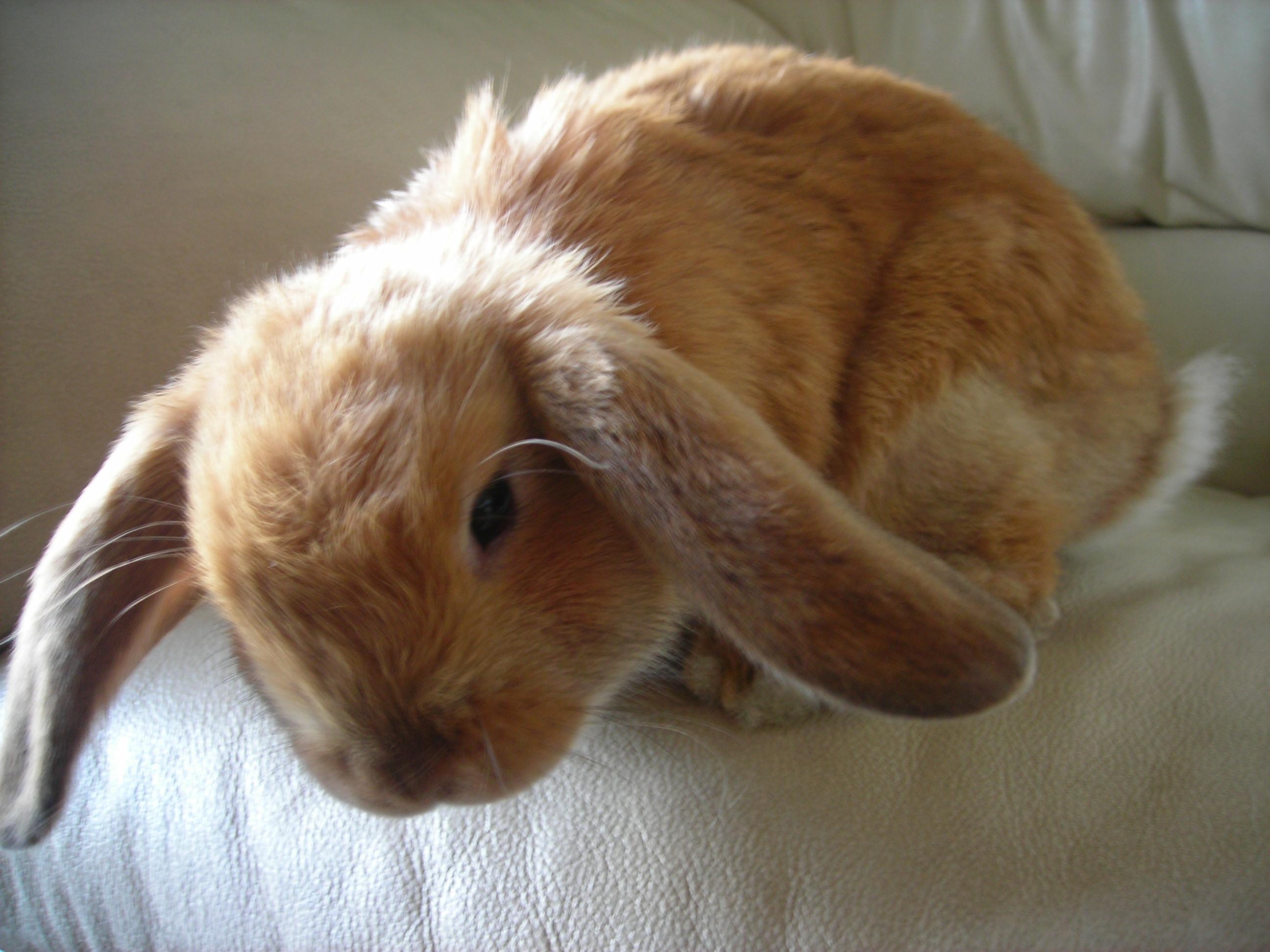 rabbit nutcracker eBay
