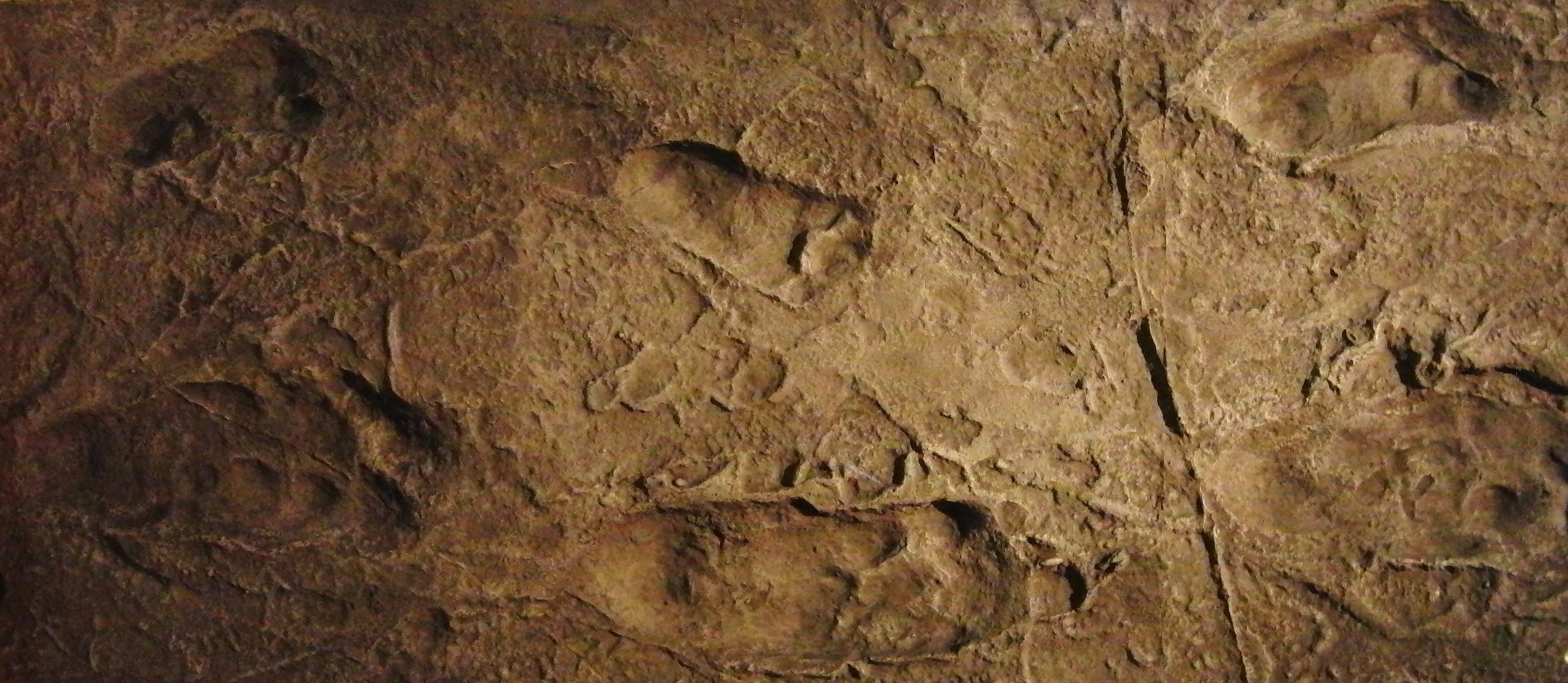 Huellas de Australophitecus en Laetoli