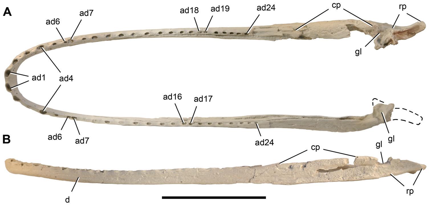 Laganosuchus.jpg