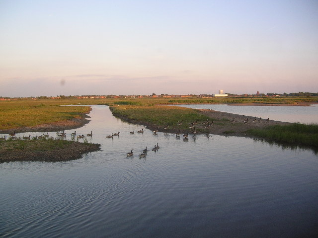 Marshside, Southport. View from RSPB Hide showing Canadian Geese