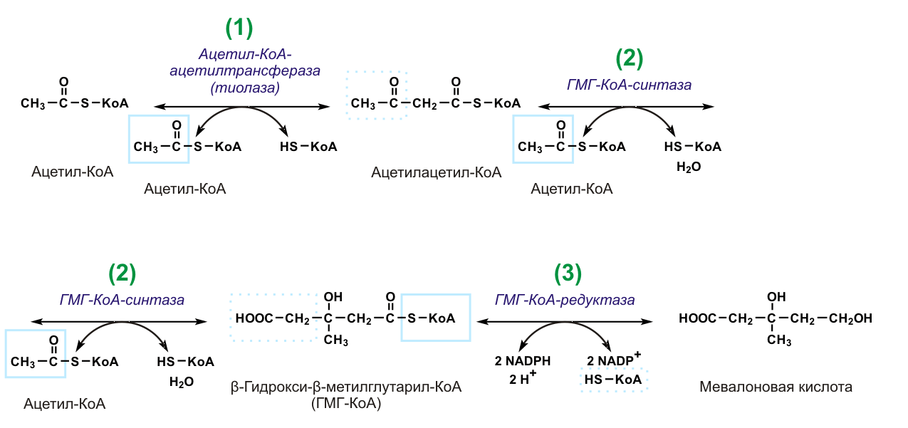 File Mevalonate synthesis