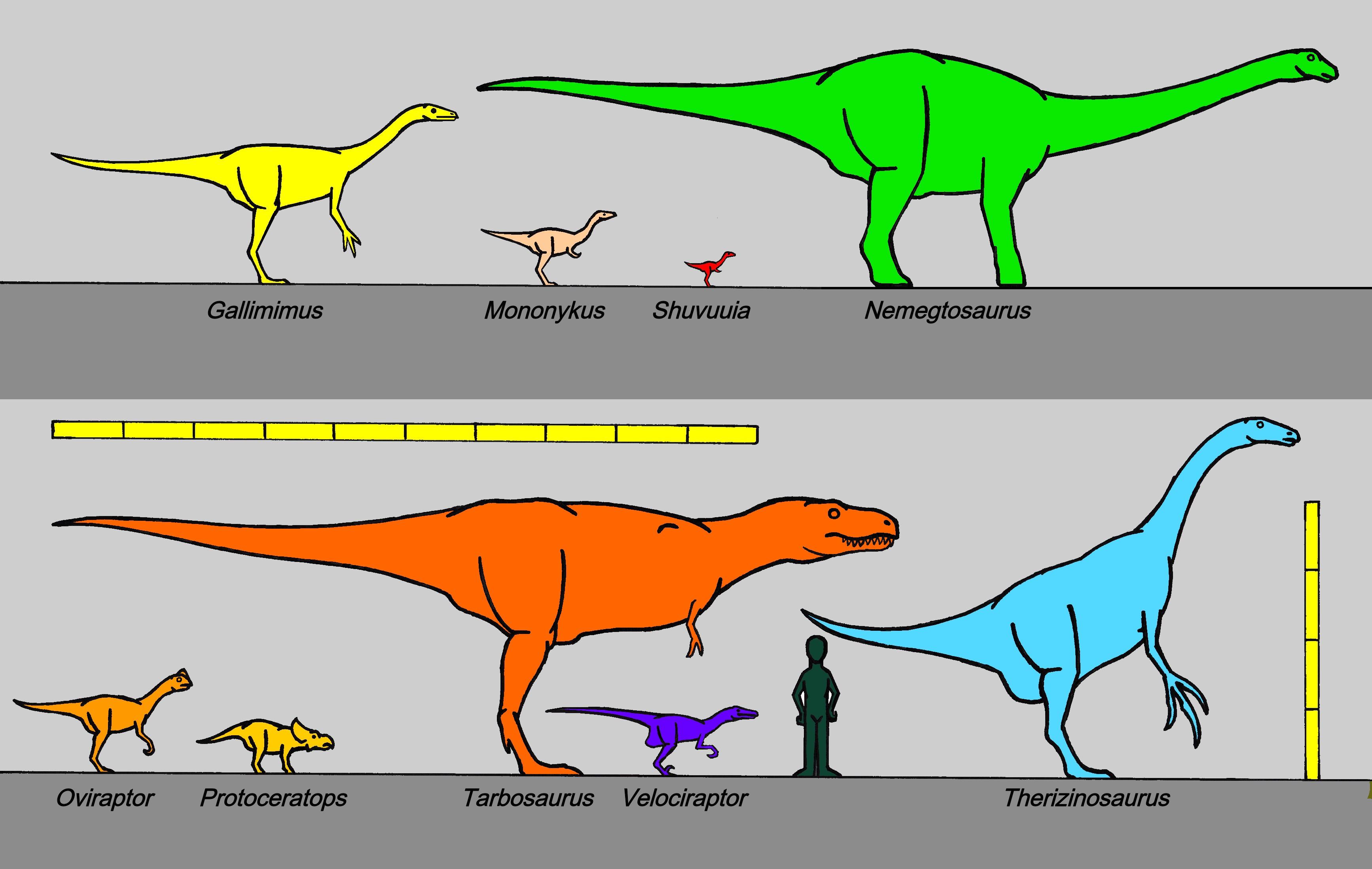 File mongolian canian dinosaurs 8426 jpg wikipedia the free