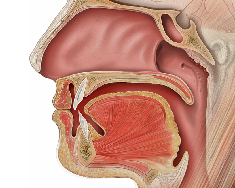 Area Between Nose And Mouth 54