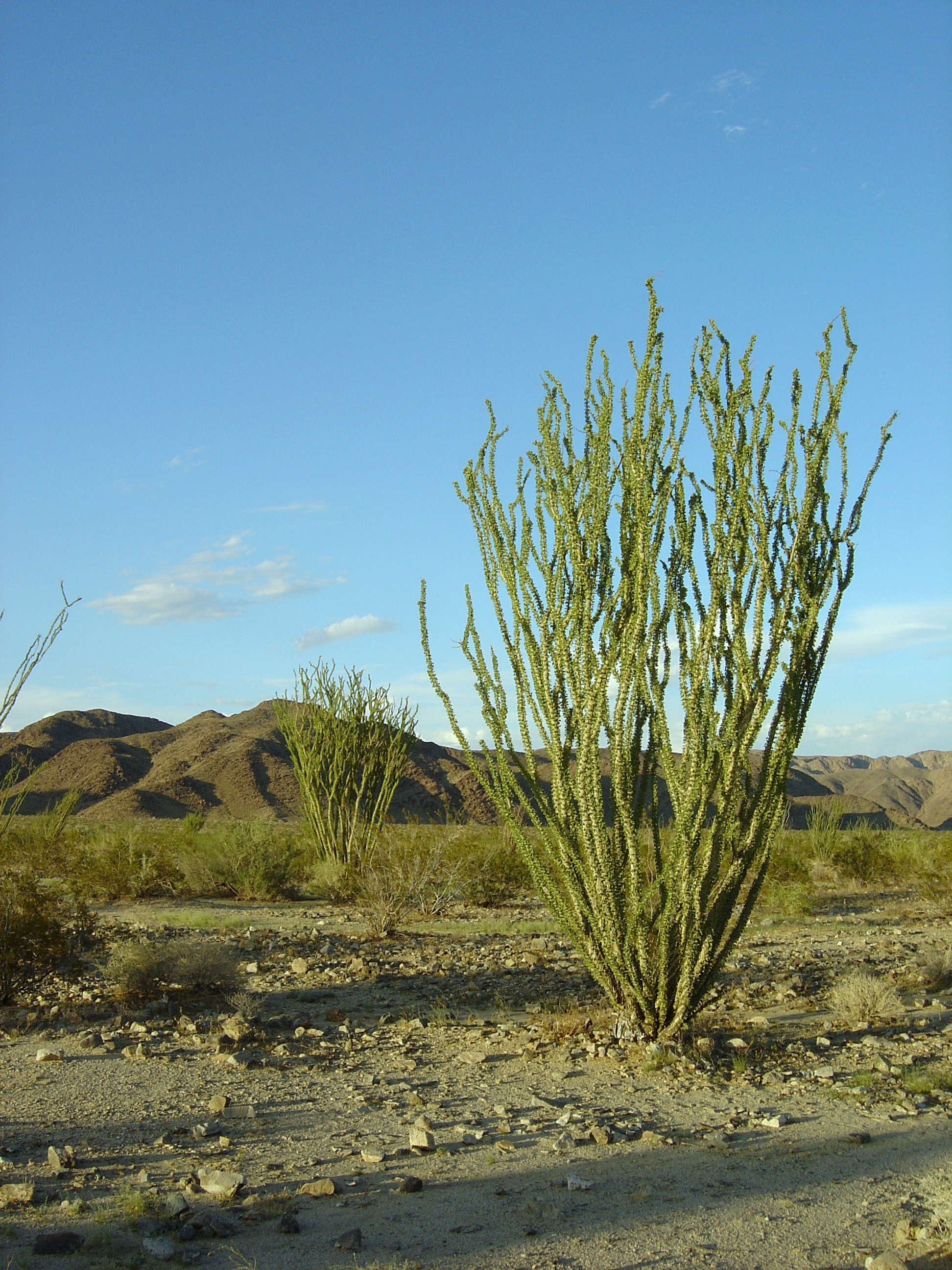 ocotillo online dating Alternate numbers webmail sign in.