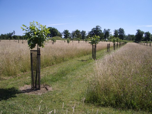 Orchard Trees at Lyveden New Bield - geograph.org.uk - 324718