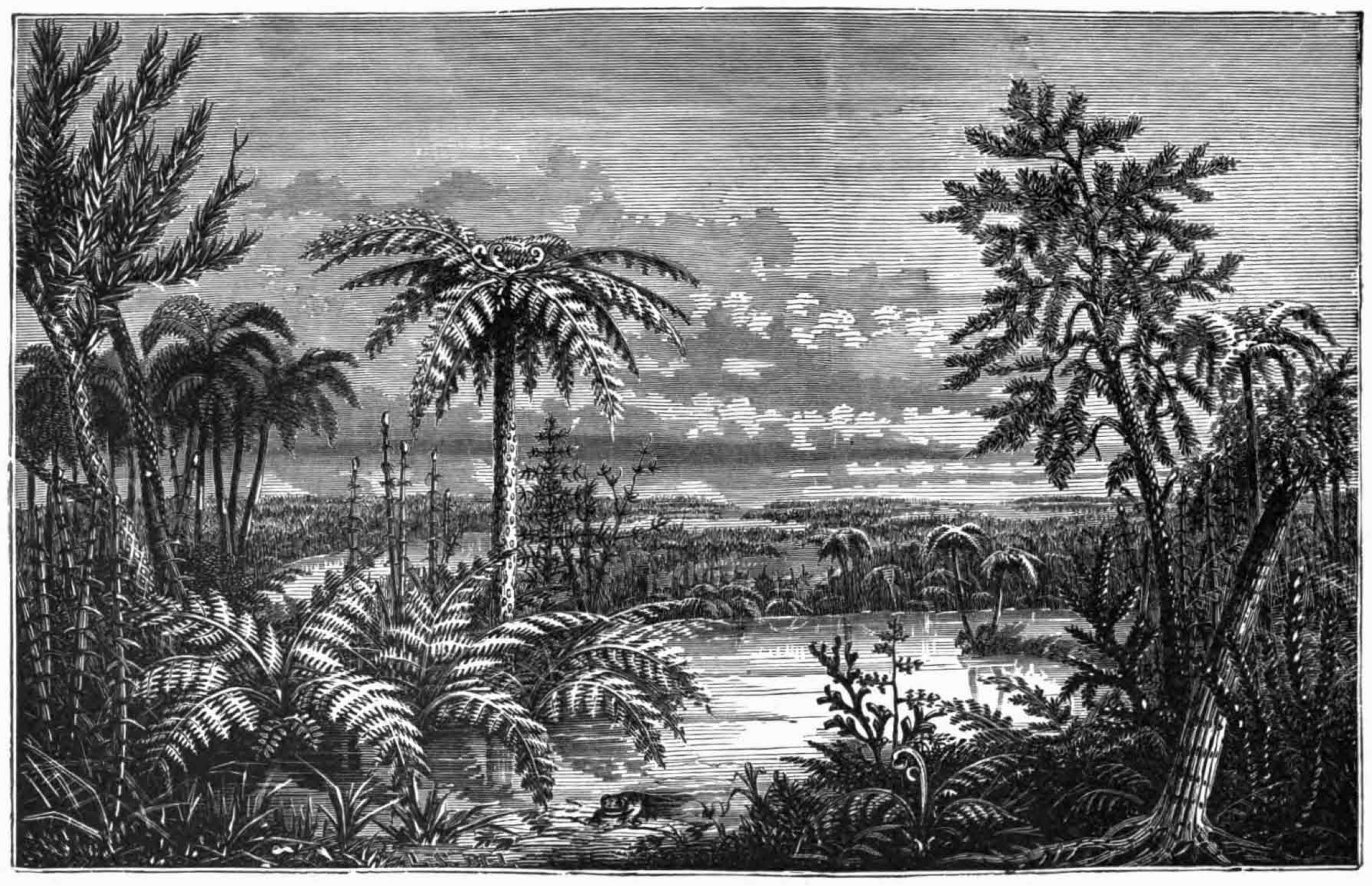 File:Our Native Ferns - Carboniferous Pteridophyta.jpg ...
