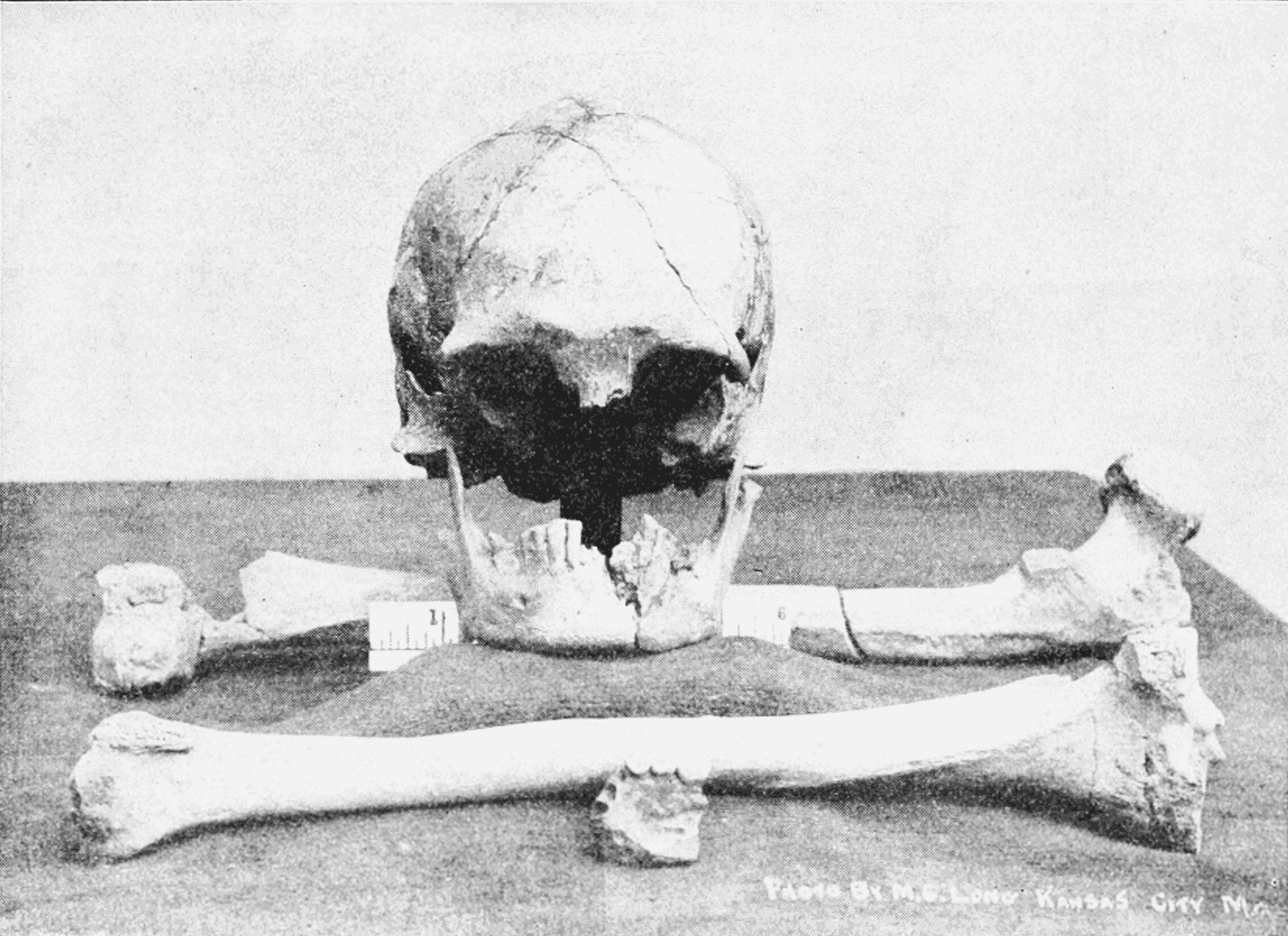 PSM V62 D473 Front view of the skull and various bones found in the tunnel.png
