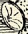 Pajzs (,,heraldika).PNG