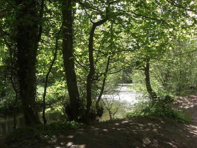 Plessey Woods Country Park - geograph.org.uk - 1314428