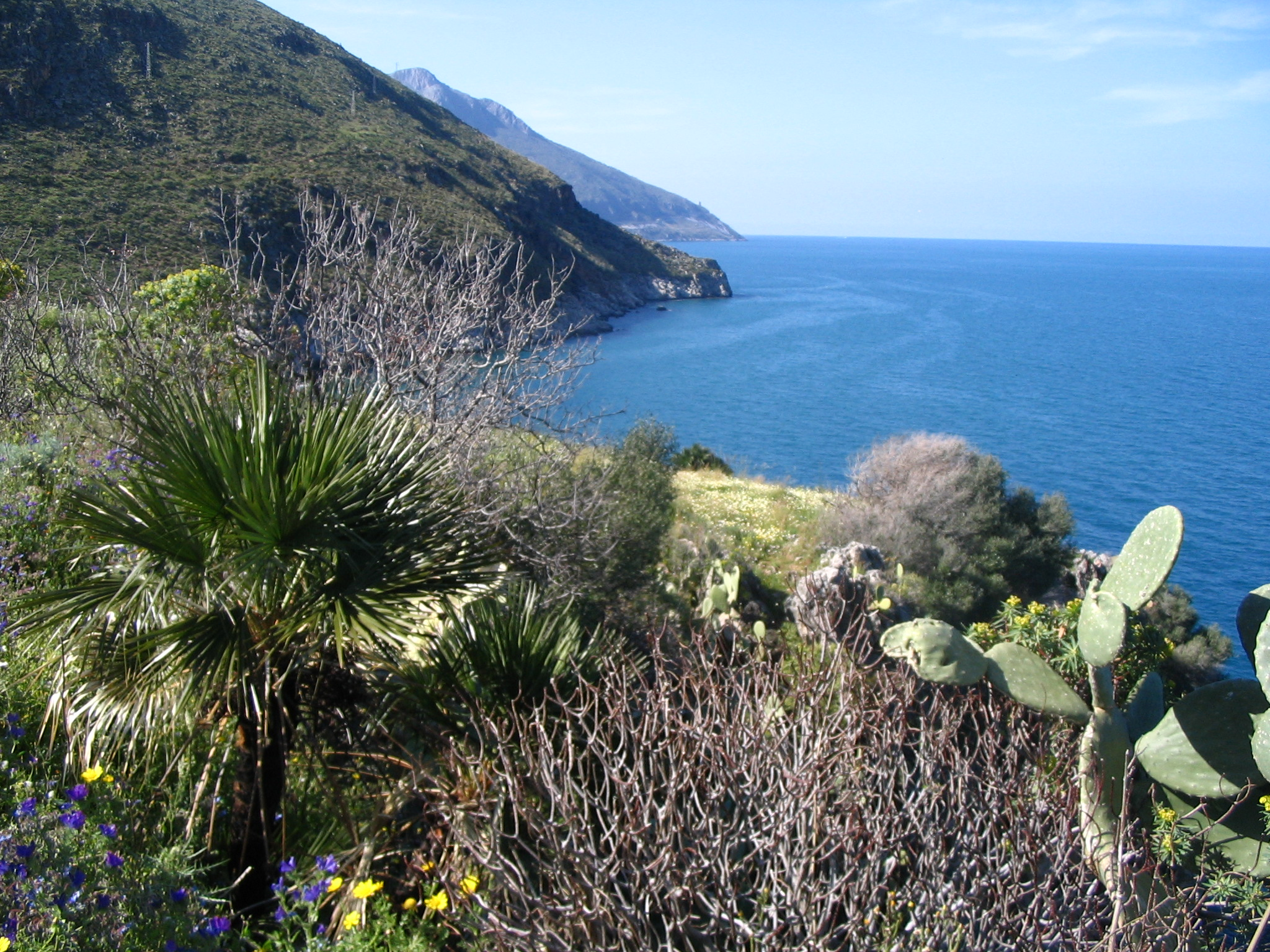 Réserve Naturelle de Zingaro - Chamaerops.JPG