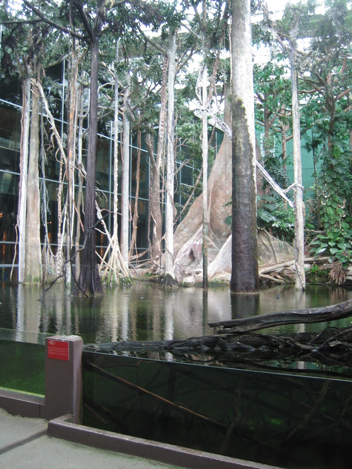 File:Rainforest Cosmocaixa.jpg - Wikimedia Commons