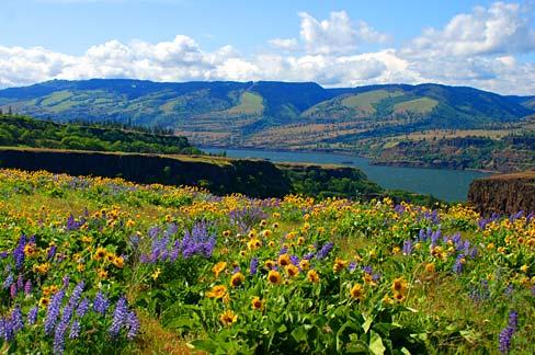 File Rowena Crest Wildflowers Wasco County Oregon Scenic
