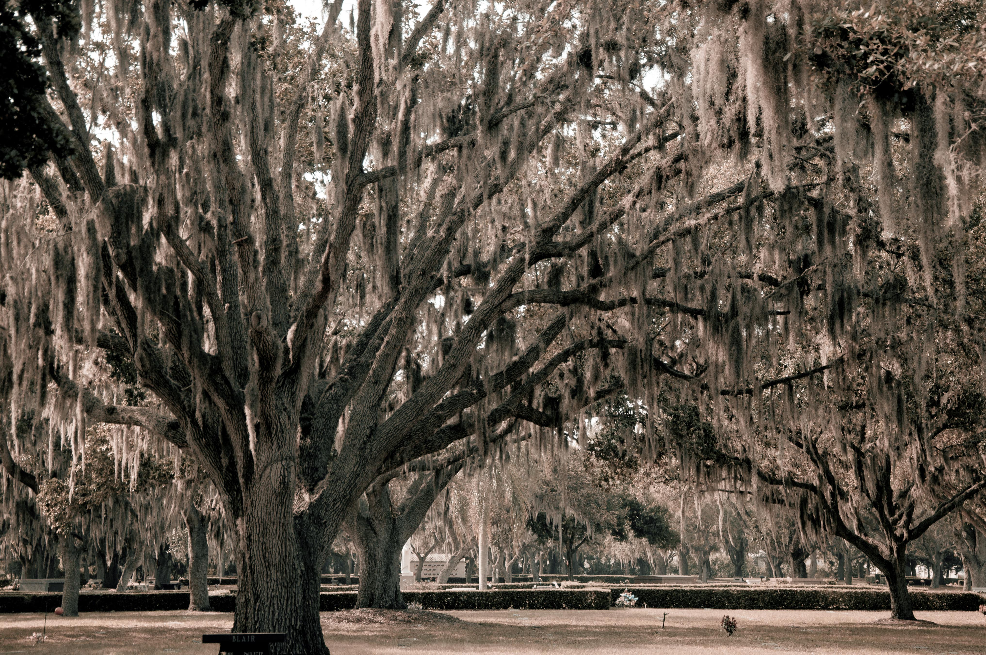 Mesmerized by Stunning, Spooky Spanish Moss Hanging from Ancient Trees