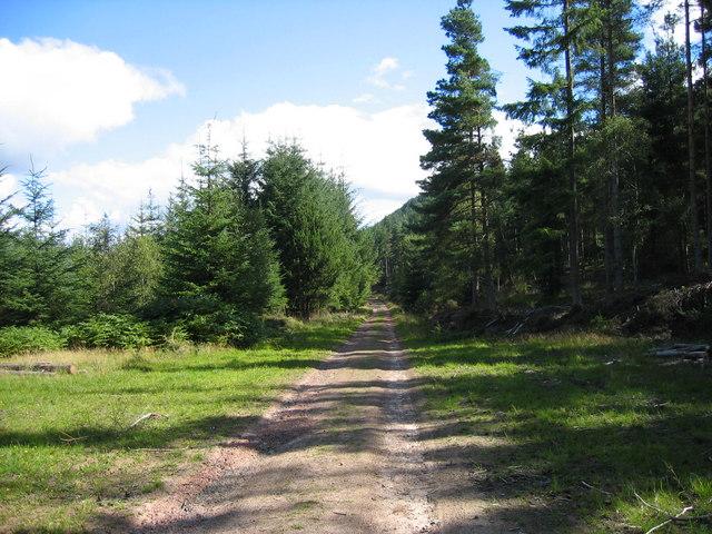Thrunton Wood - geograph.org.uk - 229258