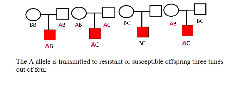 Fundamental Principle of Transmission Disequilibrium test in Trios