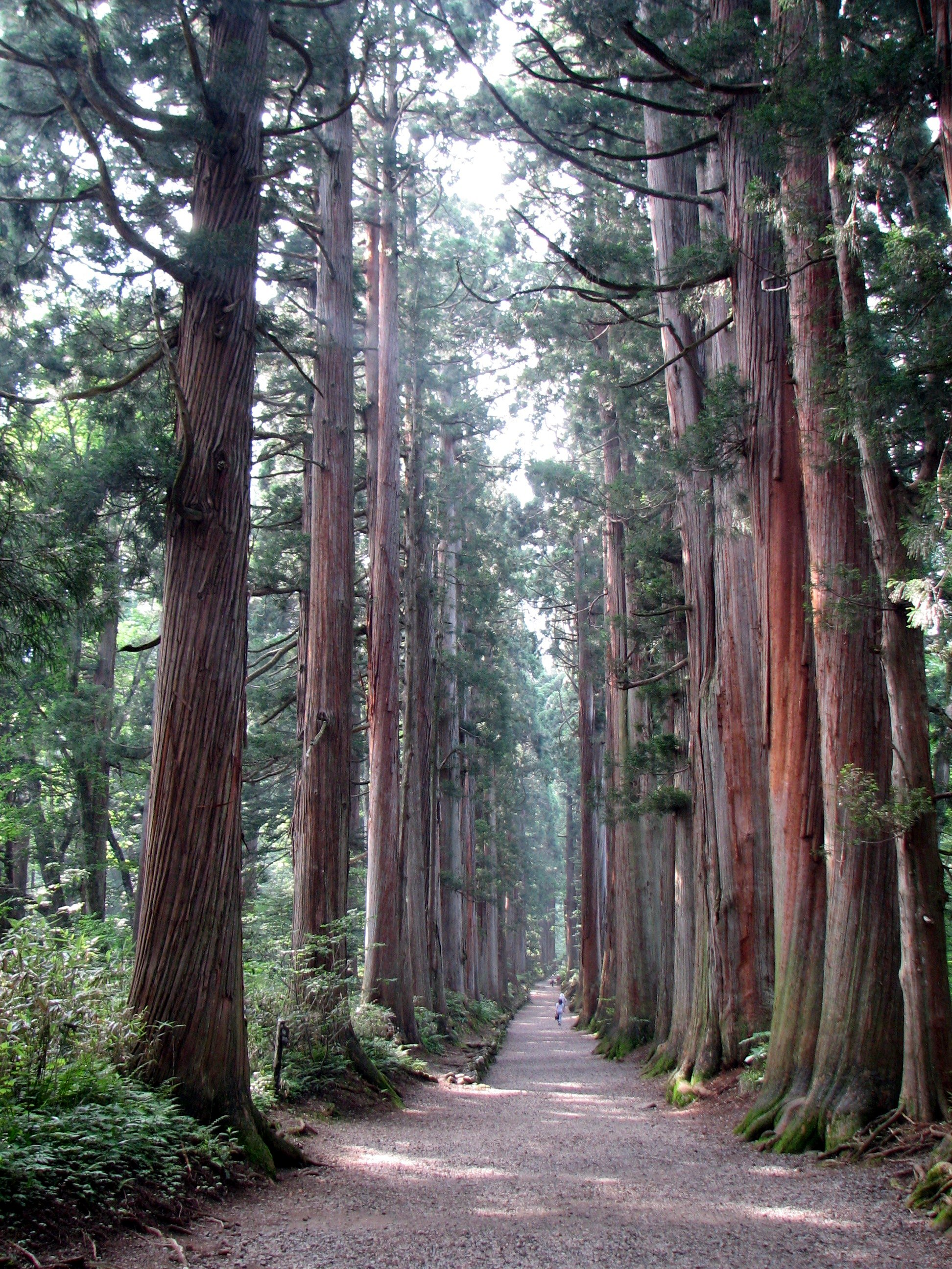 http://upload.wikimedia.org/wikipedia/commons/6/61/Tree_lined_path_to_the_Togakushi_shrine1.jpg