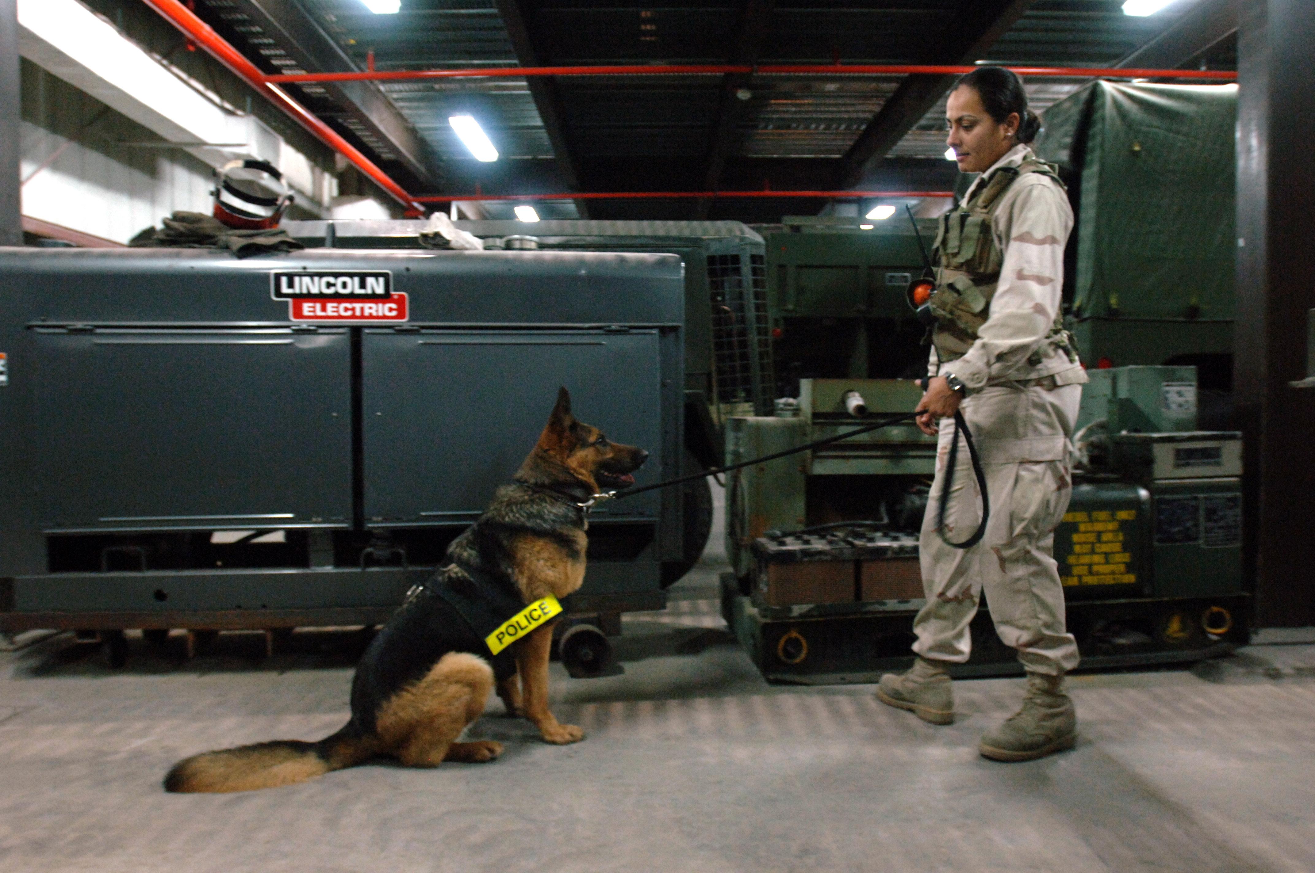 German Shepherd Security Dogs For Sale