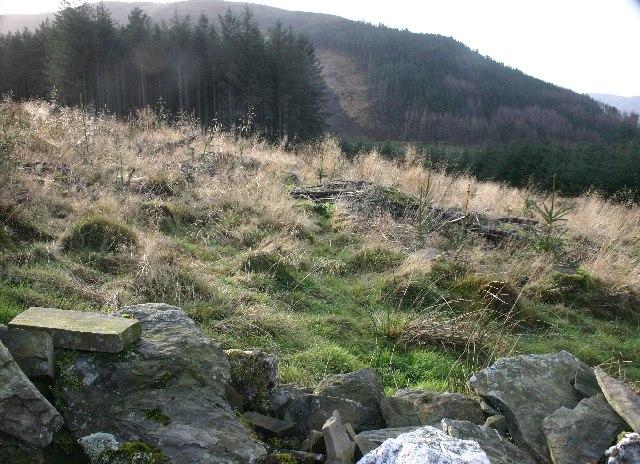 Aiken Plantation, Whinlatter - geograph.org.uk - 91229