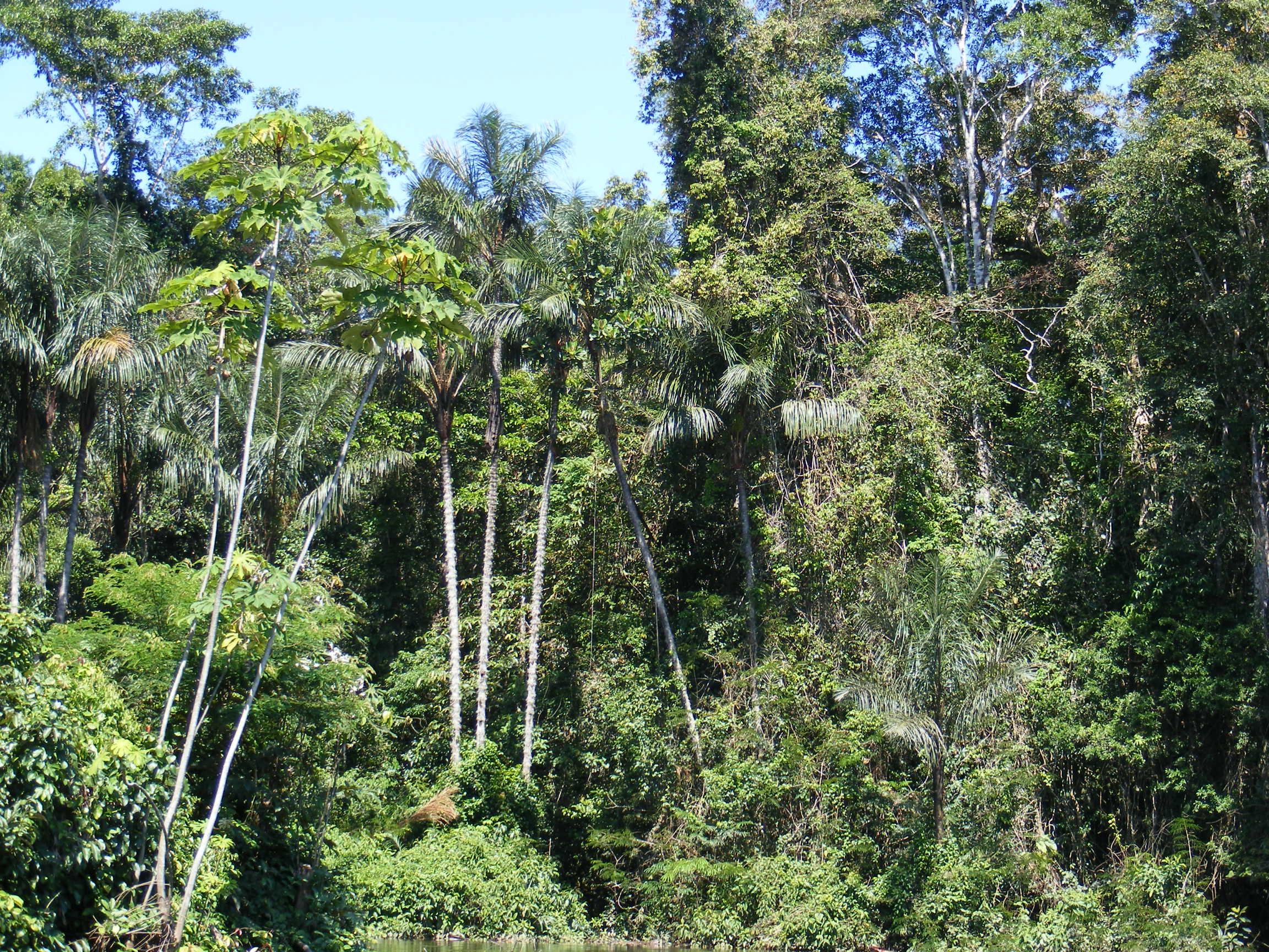 Selva Baja Wikipedia La Enciclopedia Libre