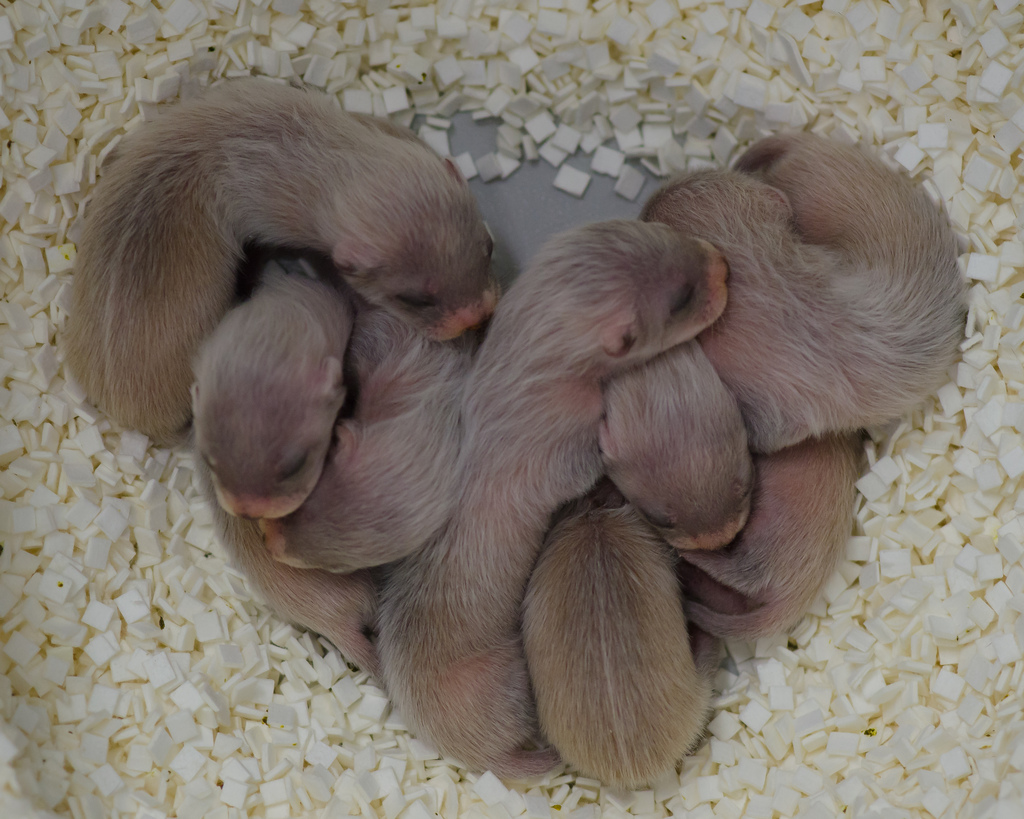 Baby Ferrets For Sale In West Palm Beach