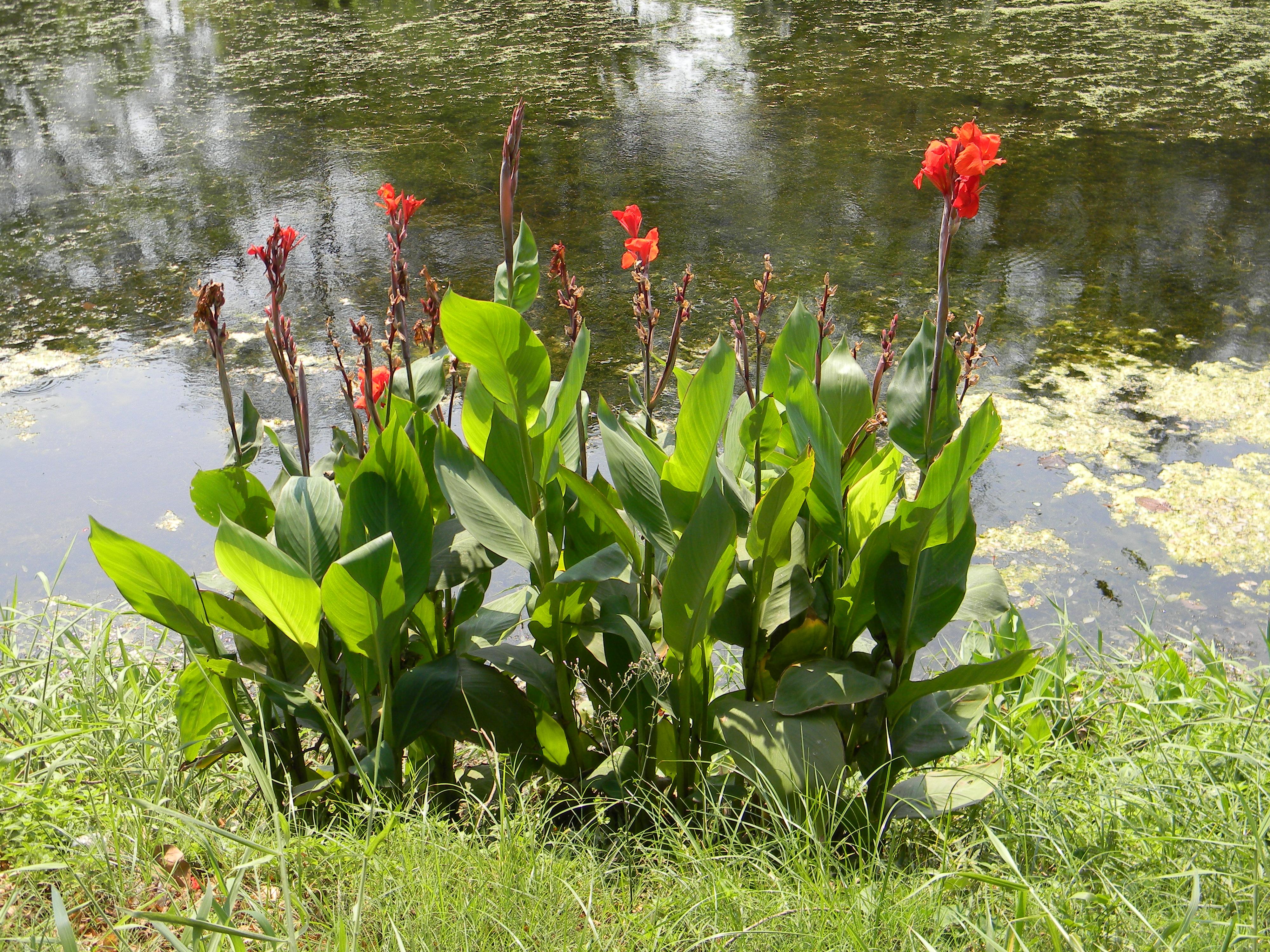 Www Jardin Et Decoration Be Floralux Dadizele Flandre Occidentale Htlm