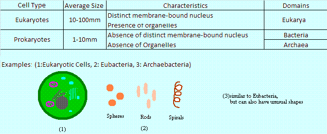 Structural Biochemistry/Three Domains of Life - Wikibooks, open ...
